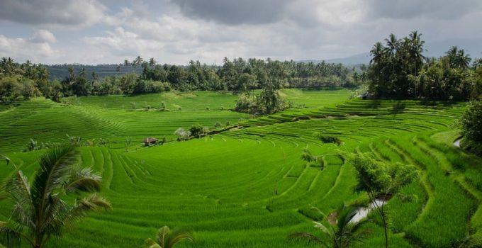 Creditele agricole