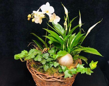 Dăruiește flori persoanelor dragi prin intermediul florăriei online cu livrare rapidă